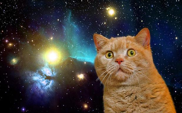 Sydney Is Getting The Space-Themed Cat Cafe It Never Knew It Needed Until Now