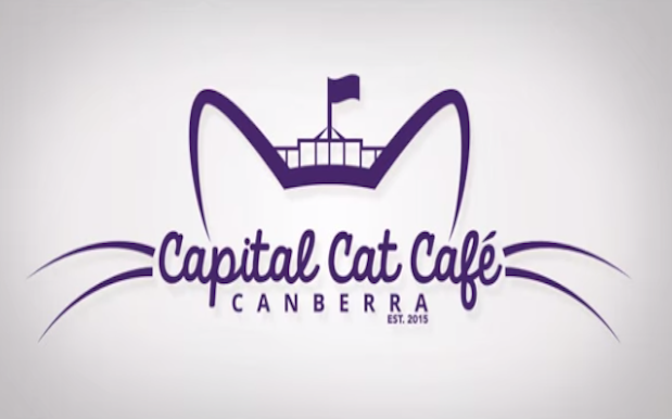 Canberra May Soon Get The #Auspol-Themed Cat Cafe It Never Knew It Wanted