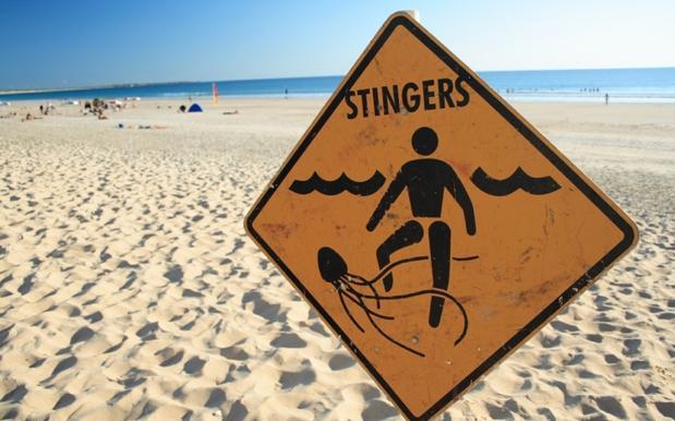 Three More Irukandji Jellyfish Sting Victims Airlifted From Fraser Island