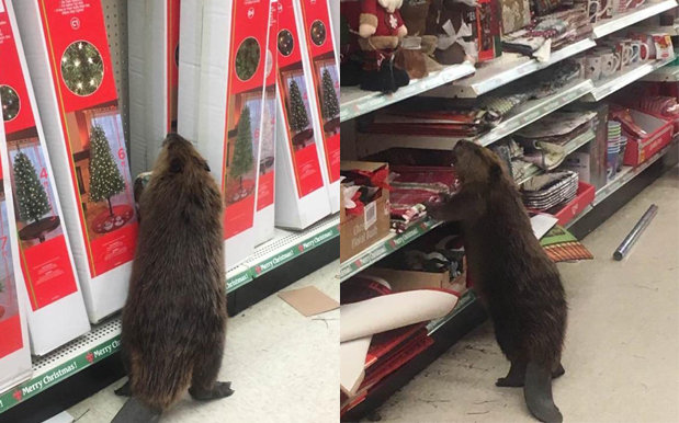 Can't A Beaver Do His Xmas Shopping Without Someone Calling The Cops?