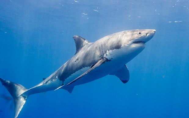 """20 Sharks Spotted On VIC Coast, Experts Say That's """"Sharkier"""" Than Usual"""