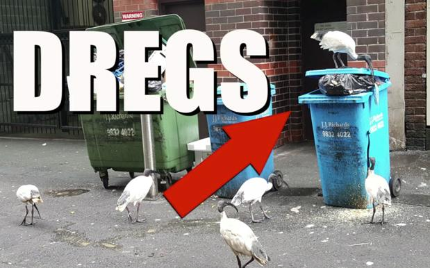 WATCH: Our Bin-Loving Friend The Ibis Finally Gets The Anthem It Deserves