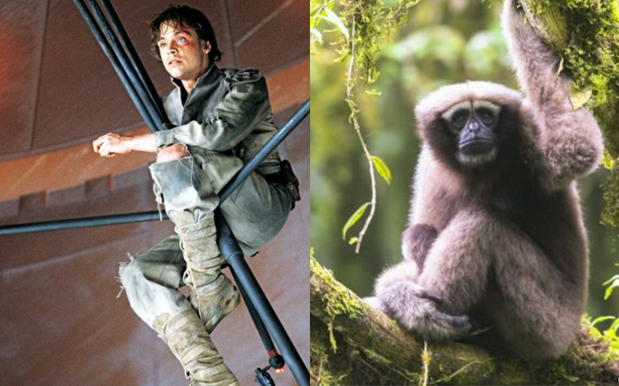 A New Primate Was Named A 'Skywalker Gibbon' & Mark Hamill's Fkn Loving It