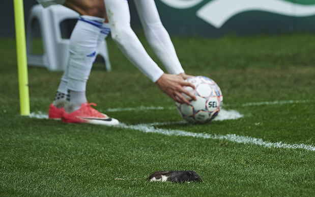WATCH: Gutted Footy Fan Chucks Dead Rats At Opposition During 0-1 Loss
