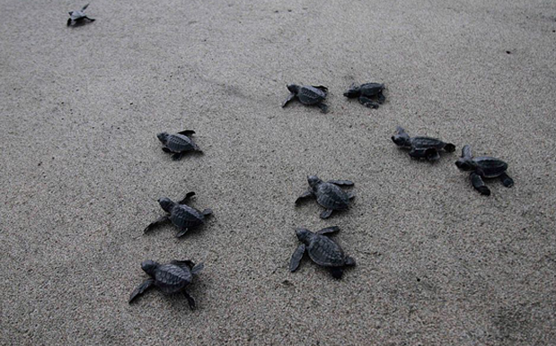 Hate To Alarm But You Can Now Adopt QLD's Hatchling Baby Turtles