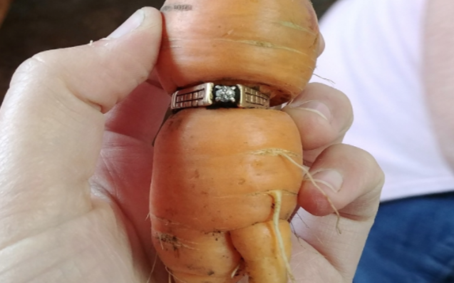 Woman delighted as misshapen carrot leads to lost engagement ring