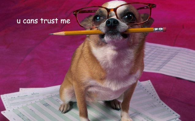 Why A Pet CV Is The Most Important Thing Any Renter's Floofer Can Have