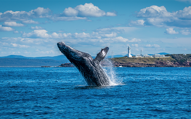 All the best nsw spots to go whale watching spot an irl free willy all the best nsw spots to go whale watching spot an irl free willy voltagebd Gallery
