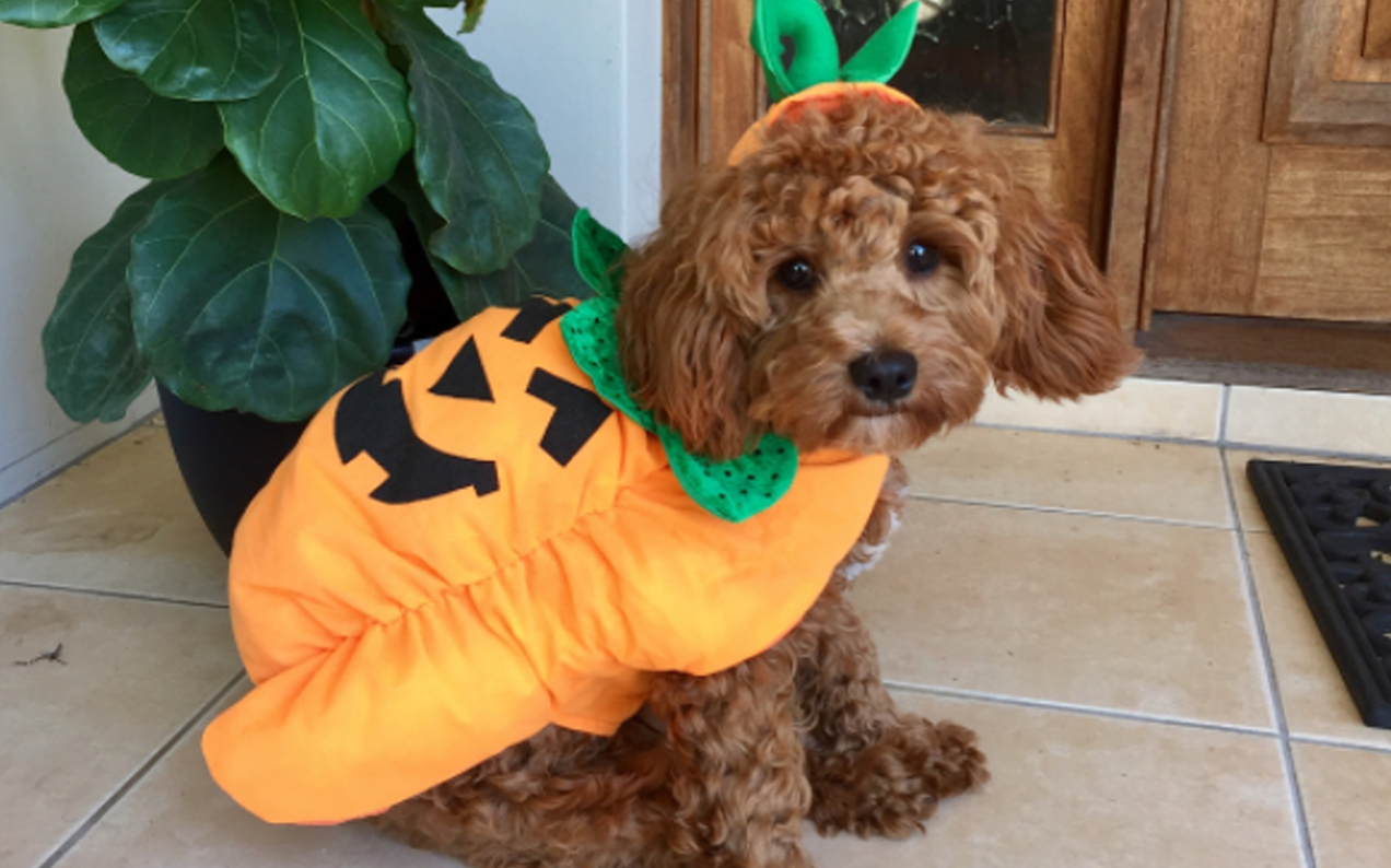 Pets Of Australia Are Upping Their Halloween Threads W/ Kmart's $7 Range