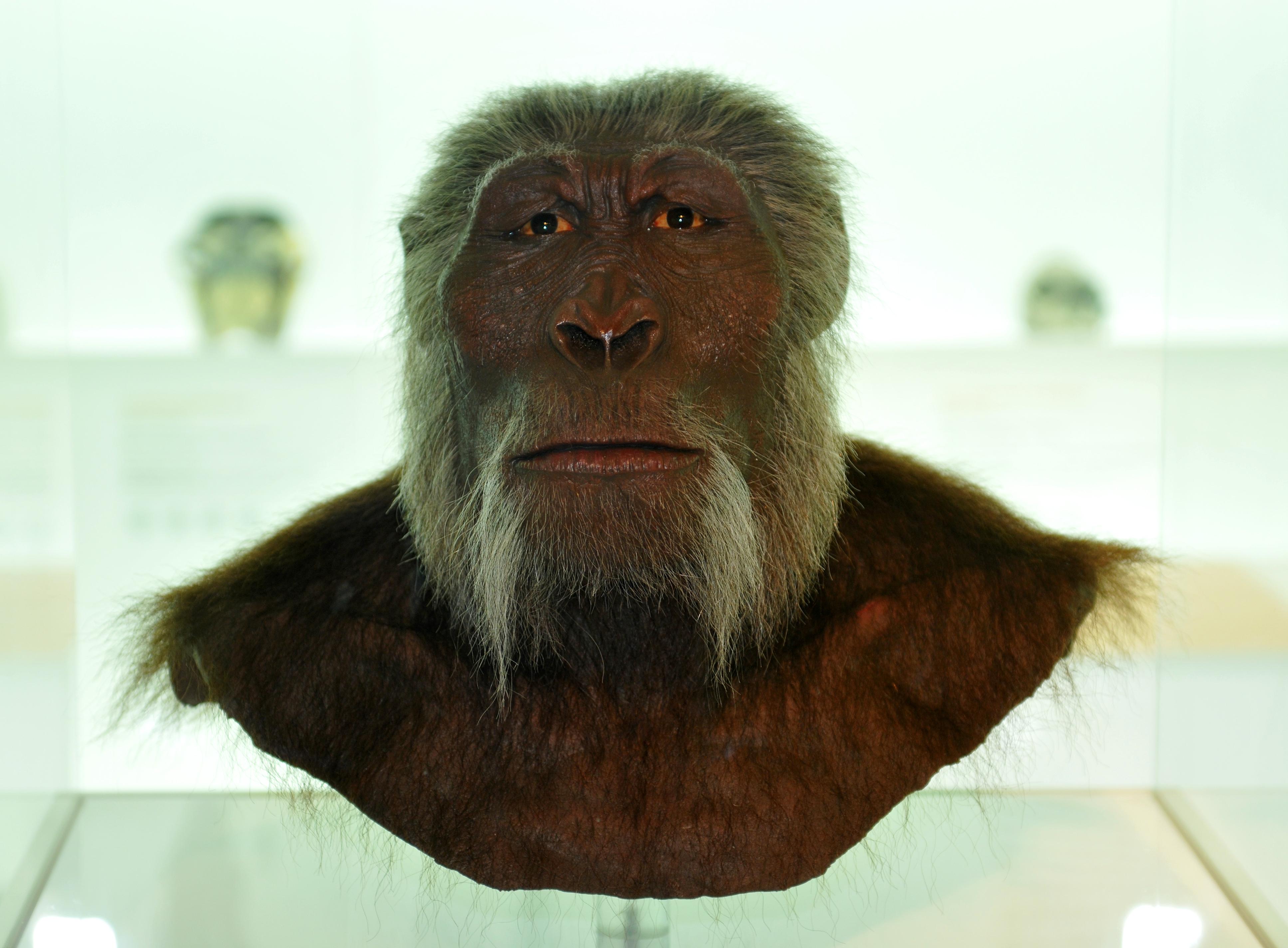 Museum Of Natural History Internship Reviews