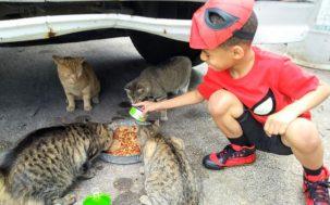 Shon Catman Kolony Kats