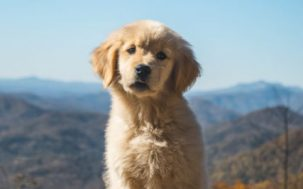 Dog Owners Live Longer