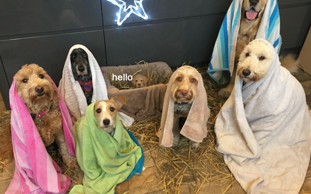 Merry Christmas, Here's A Nativity Scene Made Entirely Of Puppies