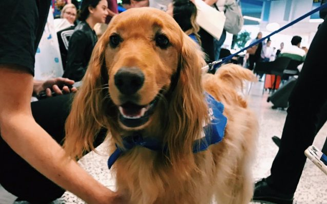 Melbourne Airport Is Trialling Therapy Dogs To Make Xmas Travel Suck Less