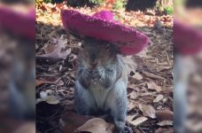 squirrel wearing hats