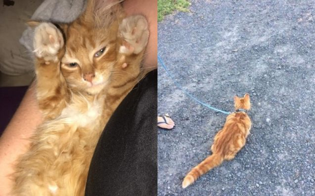 Meet Taco, The Li'l Kitty Who Went On An Adventure From Maroubra To Adelaide