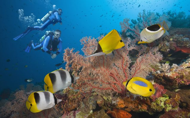 Nice Barrier Reef: Australia unveils A$60m safety plan