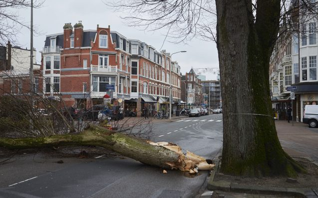 5 killed as deadly storm Friederike hits Netherlands, Germany