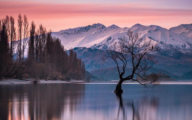Insta Idiots Are Slowly Destroying New Zealand's Magic Lake Wanaka Tree
