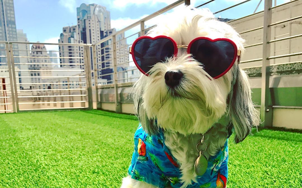 This Pet-Friendly Hotel Has A Puppy Mascot That Will Visit Your Room