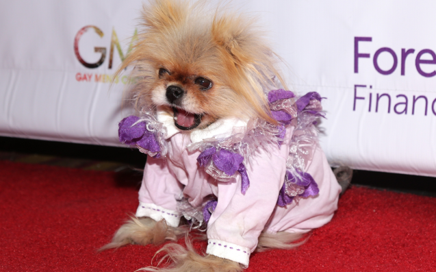 What Happened To Lisa Vanderpump S Dog Giggy
