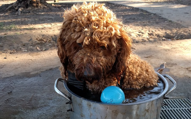 Animals Hate The Heatwave Too, And Here's How They're Keeping Cool In Syd