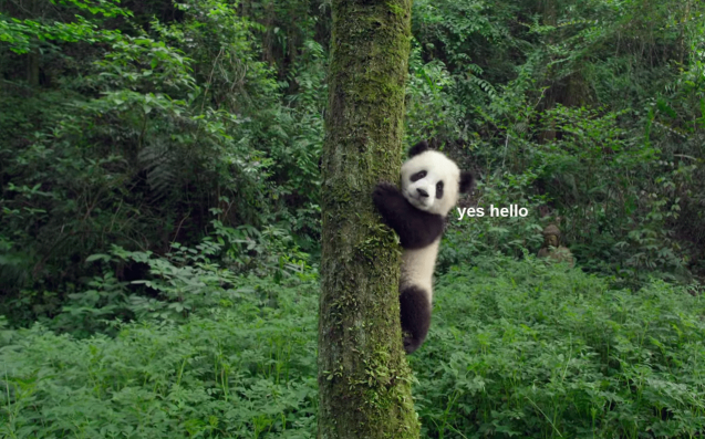 Prepare Yourselves For The Movie Of The Year: PANDAS