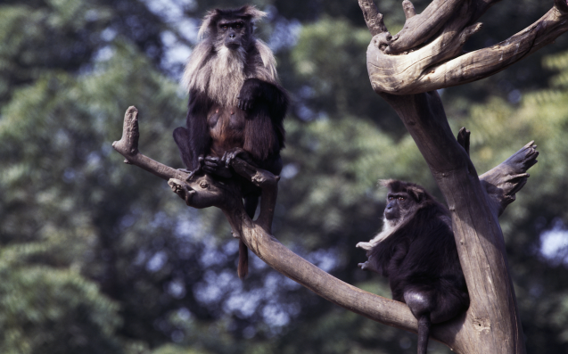 Scottish Zoo Closes For Several Days So Its Monkeys Can Grieve In Peace