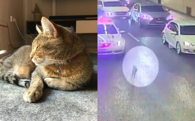 Lost Cat Reunited W/ Family After Being Spotted Doing Laps Of Sydney Tunnel