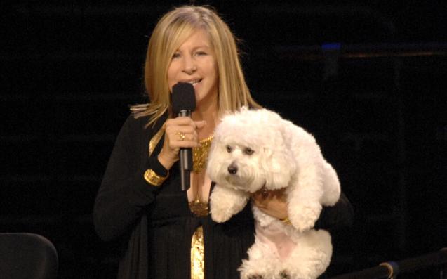 Cloning Her Dead Dog Twice Is Barbra Streisand's Way Of Having Too Much Cash