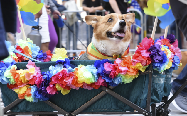 Let Actual Puppies Play Cupid At This Queer Speed Dating Night Next Weekend