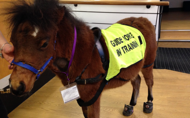 The BBC's Newest Employee Is Digby, The U.K.'s First-Ever Guide Horse