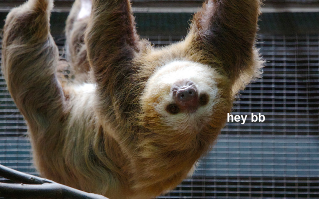 Valentine's Day Arrives Early For A Red Panda And A Sloth In A U.S. Zoo