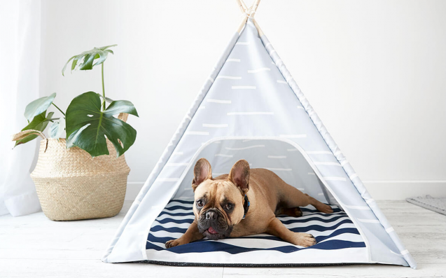 Get Yr Best Pal Feeling Hot For The Summer W/ The New Kmart Pets Range