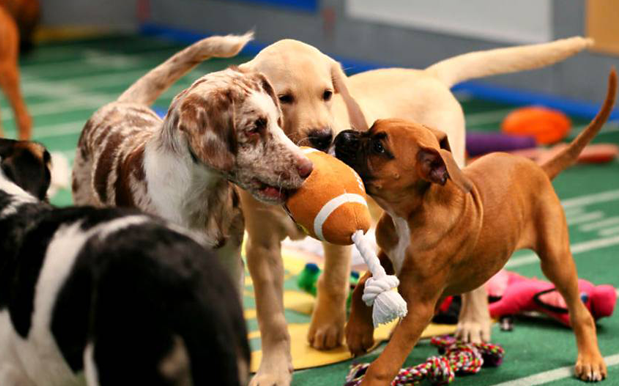 G'day Sports Fans, Here's The Highlights From The 2018 Puppy Bowl