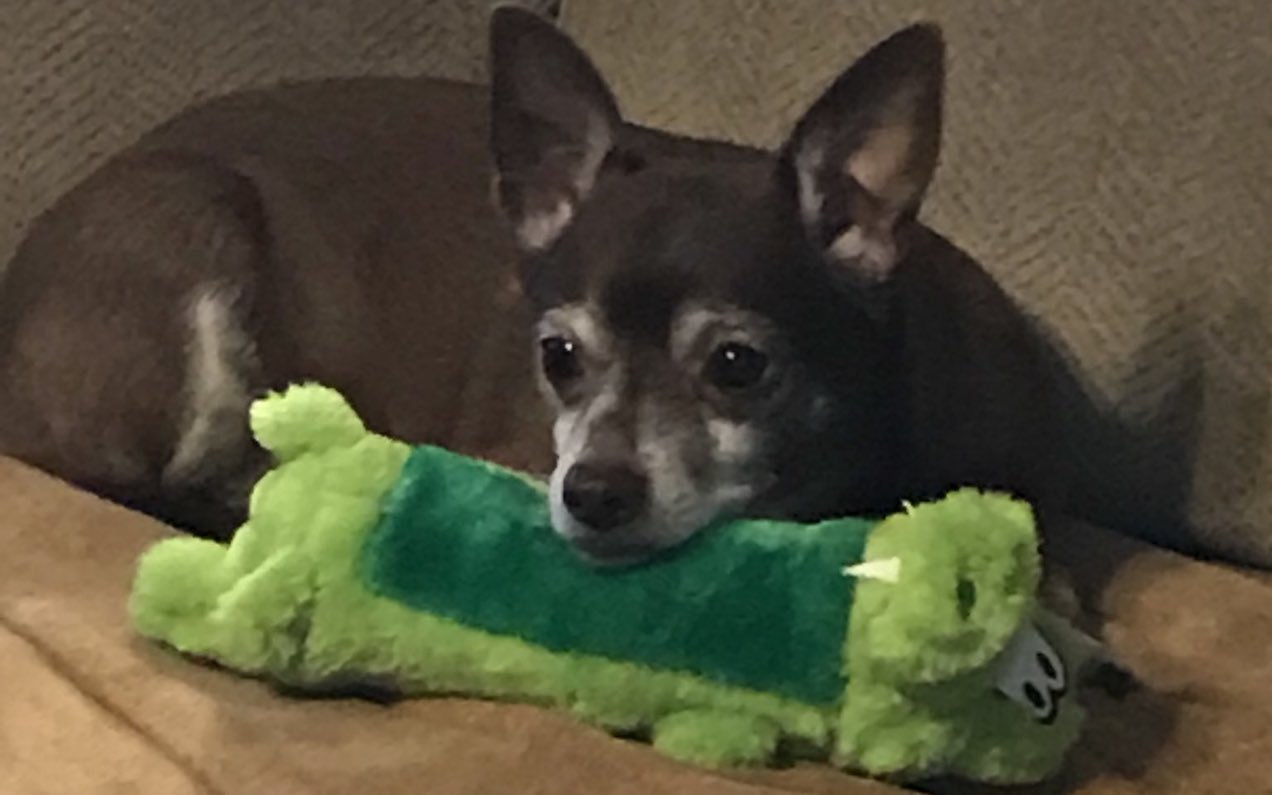 The Internet Was Good For Once And Helped Out A Senior Dog With His Fave Toy