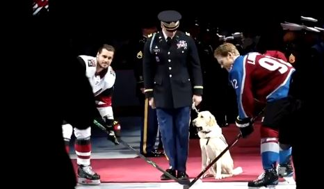 Ceremonial Good Boy Does A Hockey Honour At Big Game