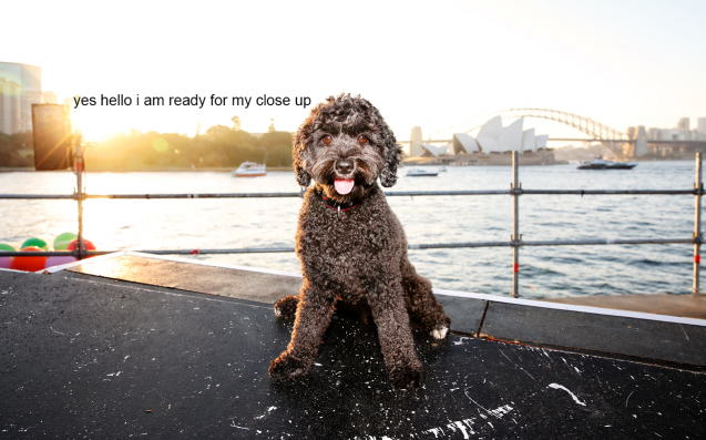 Hey Syd, Your Pup Could Be A Star In Opera Australia's Run Of 'La Bohème'