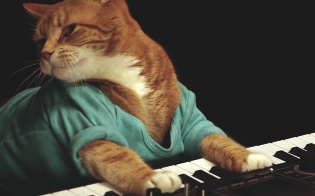The Internet's Favourite Pet, Keyboard Cat, Has Passed Away Aged 9