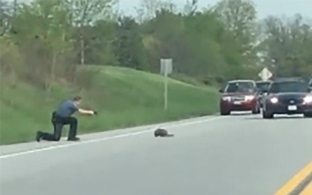 Stopped Traffic Sees Deputy Fire Bullets Into Groundhog
