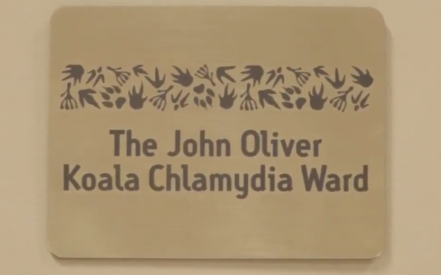 John Oliver quits after Russell Crowe names koala chlamydia ward after him